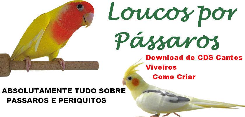 Loucos por Pássaros - Como criar passaros - download de cantos de passaros
