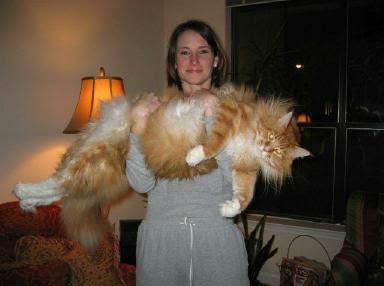 Elida Britto Protetora - como cuidar do seu gato filhote