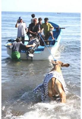 El sacrificio del animal es parte de un rito de purificación