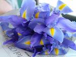 iris....