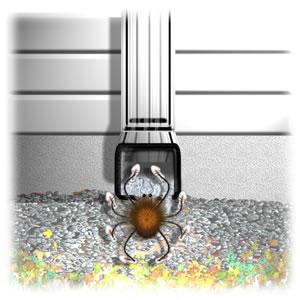 Water spout house