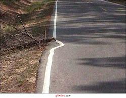 Dá muito trabalho mover o tronco!!!!!