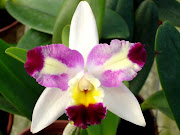 "BLC. HAW YUAN BEAUTY ""RAINBOW"
