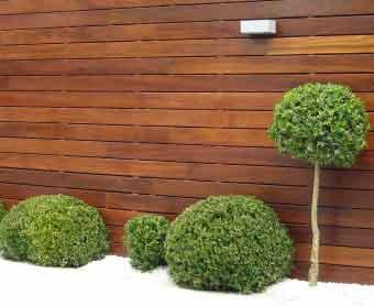 Plantas para balcones y terrazas altos el jardin y el for Arboles enanos para jardin