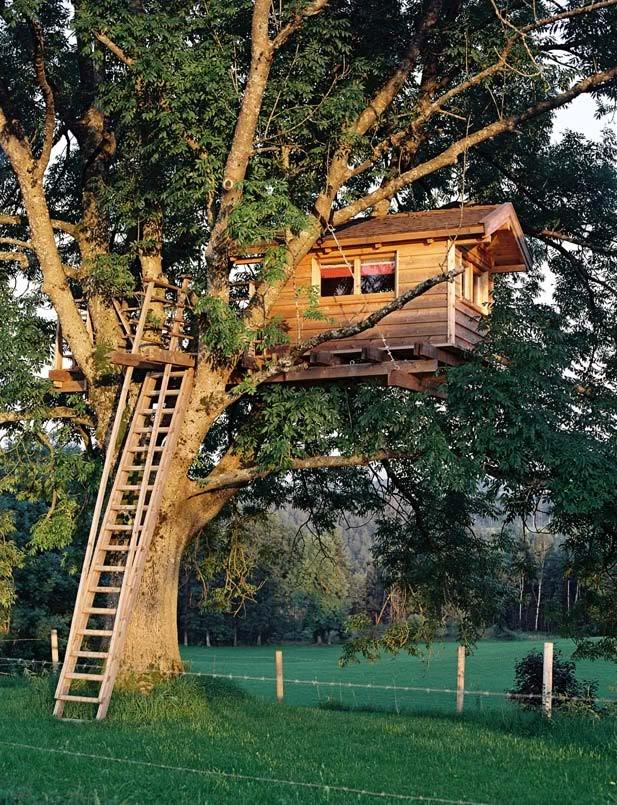 Dise o de una casita de madera en un rbol jardinitis - Casas en el arbol ...