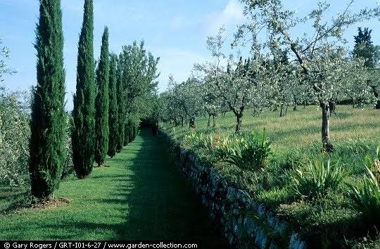 Jardinitis jardines mediterraneos jardines sostenibles - El jardin mediterraneo ...