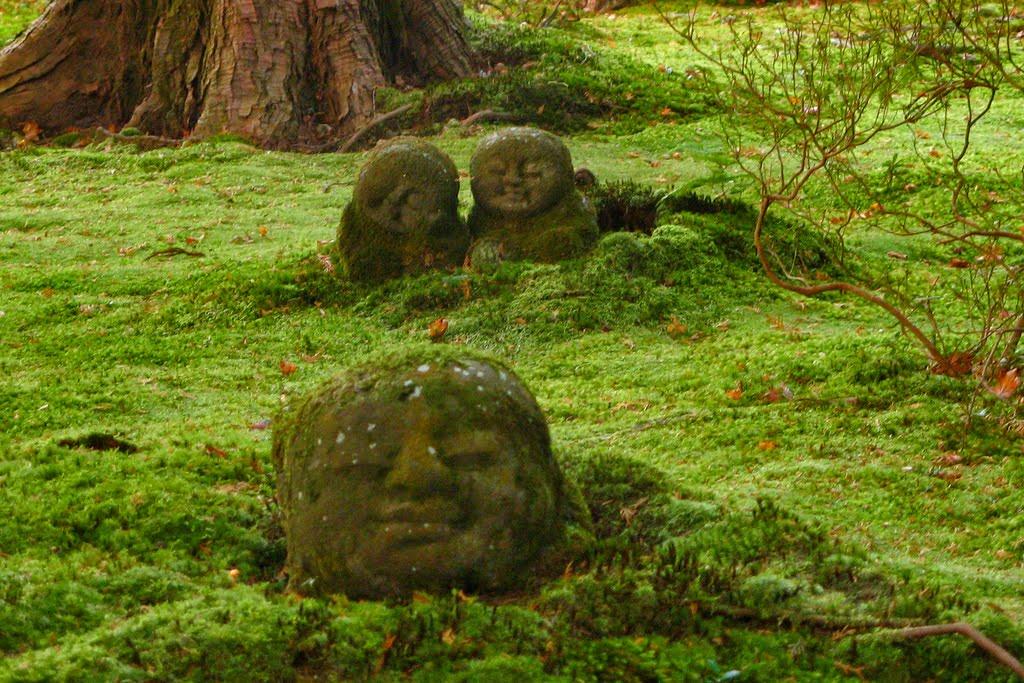 jardinitis: Musgo en el jardín