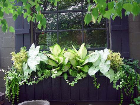 la plantacin en la misma jardinera de plantas distintas da gran variedad y vistosidad a la fachada de la casa habr que ir canviando las plantas para