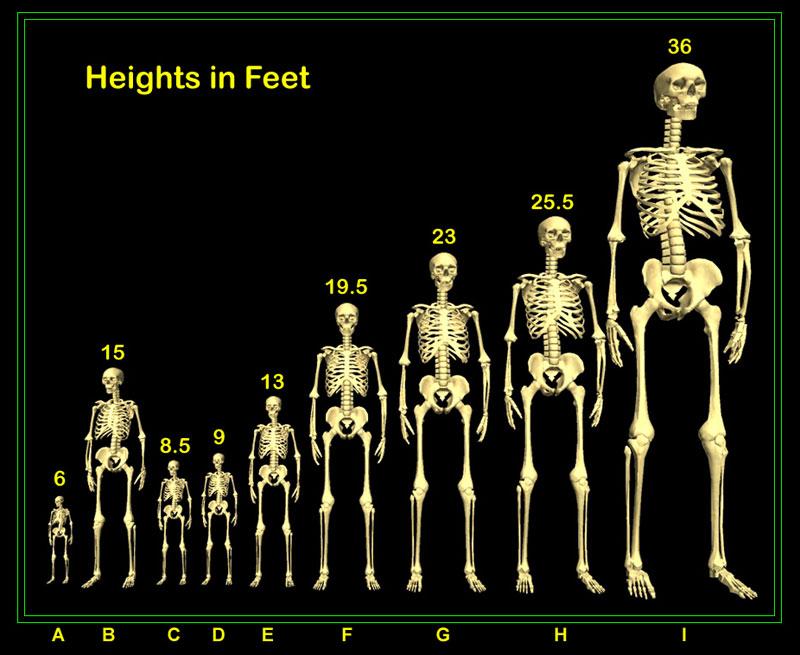 15 foot human skeleton found