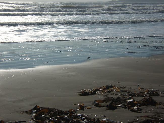 seashore splendor...