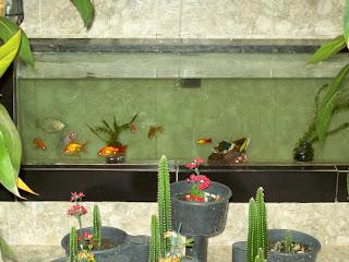 Jardim de inverno com aquario