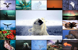 Paul Nicklen, National Geographic Photographer