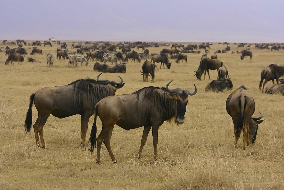 El Continente Africano, hermosas imágenes