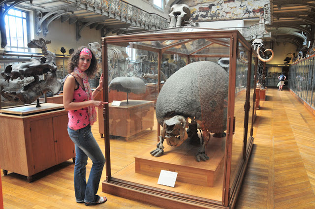 ancient armadillo of national Museum of Natural History Musée national d'Histoire naturelle