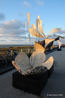 Organic Art Flower in Kijkduin