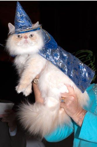 http://4.bp.blogspot.com/_tBK4emny-k4/TGTEe6r2IrI/AAAAAAAAClg/IltsNPKrL80/s1600/cat-fashion-show-59-thumb-333xauto-34934.jpg