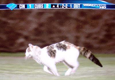 Wrigley Cat Running