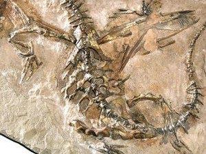 Dragon Fossil