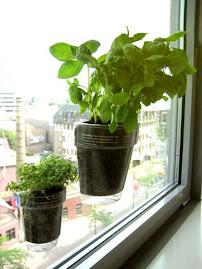 temperos na janela