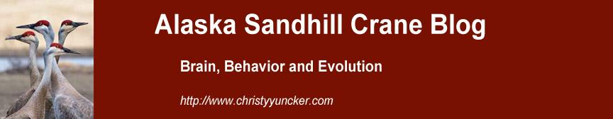 Alaska Sandhill Crane Blog