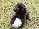Buddy with a volley ball