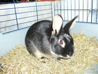Il necessaire per ospitare un coniglio in casa for Ospitare amici in casa