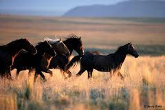 Exemplo do Cavalo