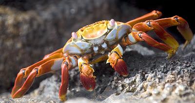 aaa Warna Warni di Dunia kepiting