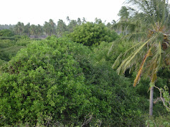coconut shamba in lamu