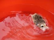 Mi amiguito peludo en la piscina