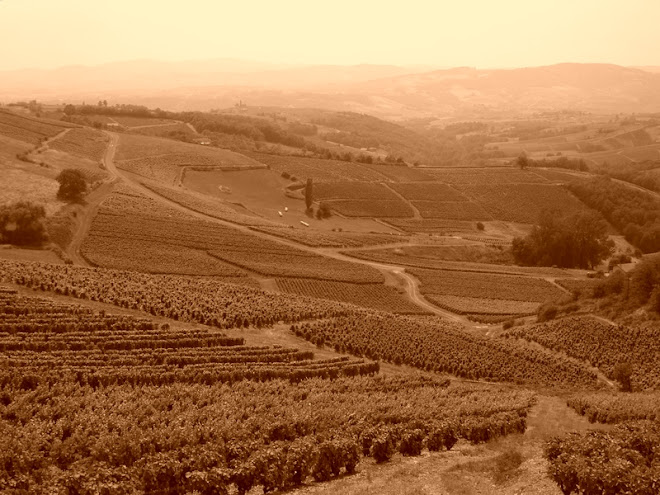 96 / France (Beaujolais vineyards)