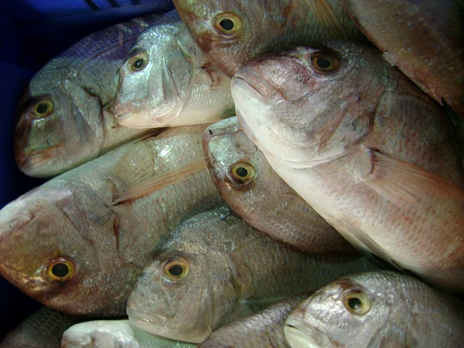 ISRAEL:  Fish from the Mediterranean Sea. / @JDumas