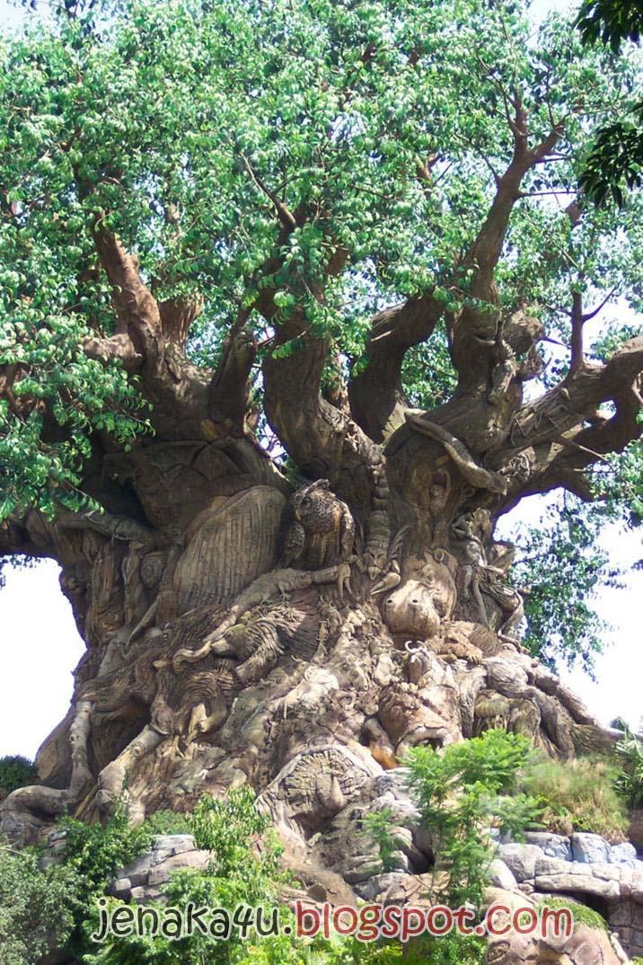 Pokok Ajaib