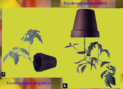 tropismo plantas trepadoras:
