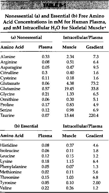 health correlator: amino acids in skeletal muscle: are protein, Muscles