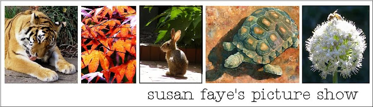Susan Faye's Picture Show