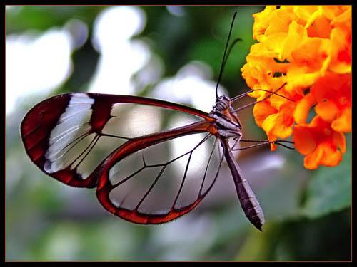 transparent-butterfly2-sm.jpg
