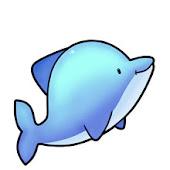 dolphin akoe