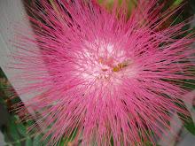 Flower Puff