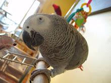 Grey bird