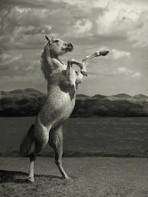 Standing arabian horse