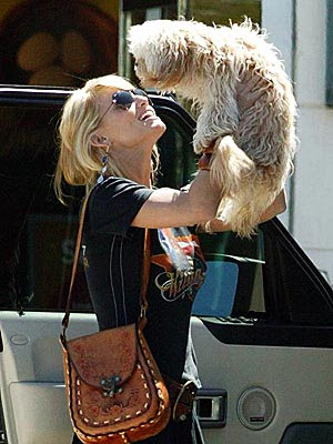 Jessica Simpson Dog Missing photo