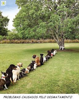 Fila de cachorrinhos para fazer xixi em uma única áravore