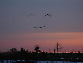 Imagem perfeita de um sorriso formado por gaivotas
