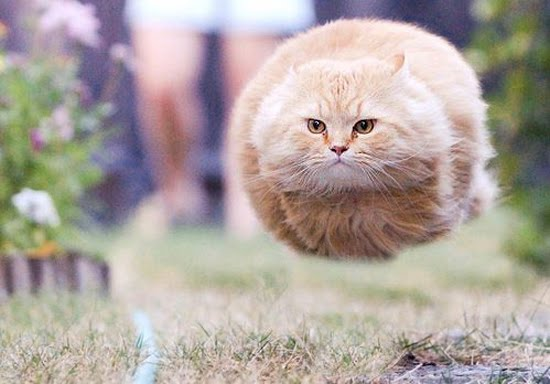 Cool cat picture herehoverball cat! Posted, Reposted, or Reported to you