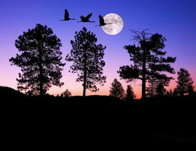1228342850 prdpnoaodgsh Beautiful Moon Pictures