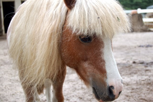 tierbilder hintergrundbilder pferde kostenlos als wallpaper f r den desktop downloaden desktop. Black Bedroom Furniture Sets. Home Design Ideas