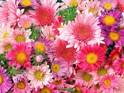 Sempre há flores para aqueles que querem vê-las
