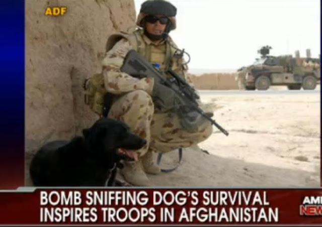 Sabi War Dog Incredible Survival In Desert