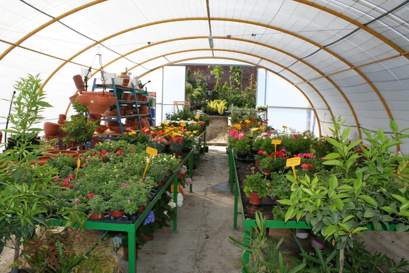 Vivero abel flores y horticultura for Viveros y jardines